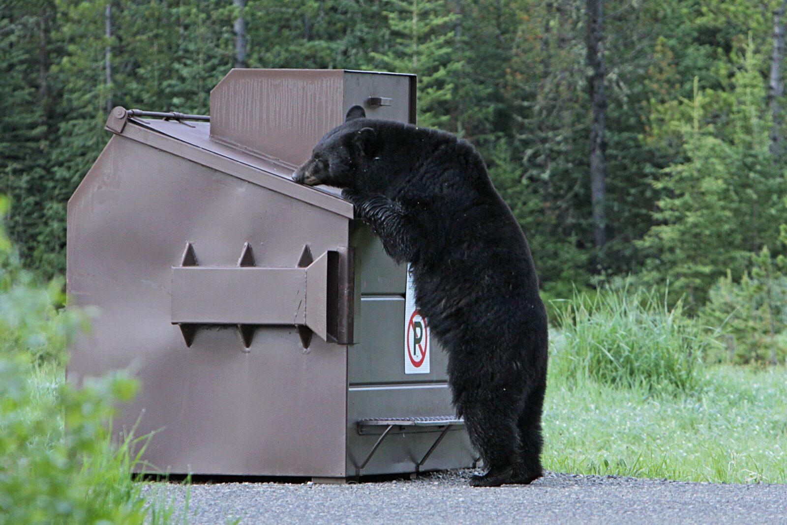 Breckenridge vacation rental trash removal
